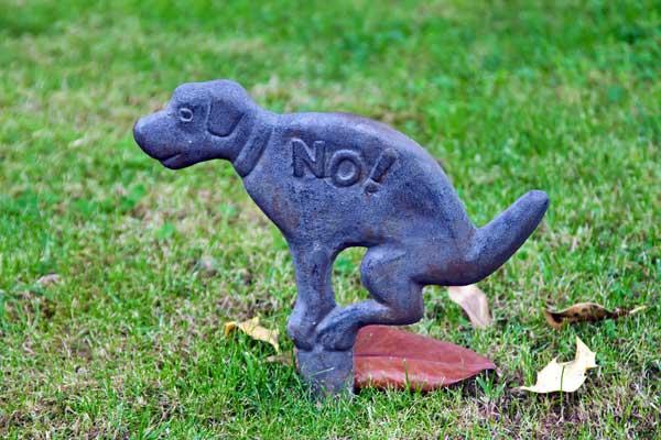 Image via Dogster.com