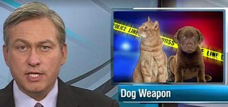 dog_weapon_enhance